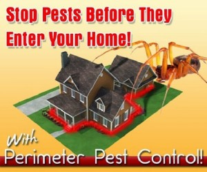pest control treatments