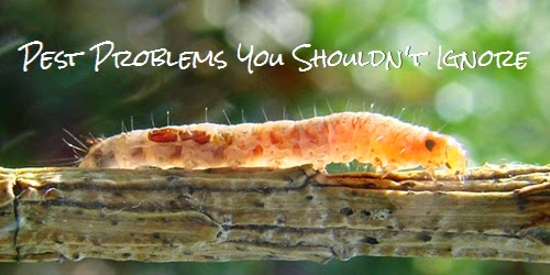 pest problems control cedar rapids