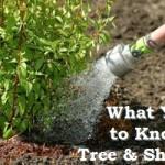 tree shrub care cedar rapids