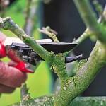proper pruning trees