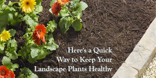 mulch plants landscaping cedar rapids