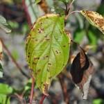 plant damage drought