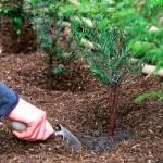 mulch moisture plants
