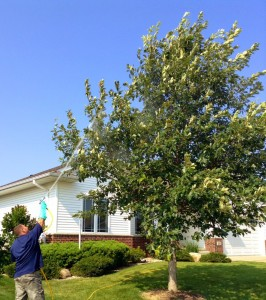 tree and shrub care emerald ash borer cedar rapids