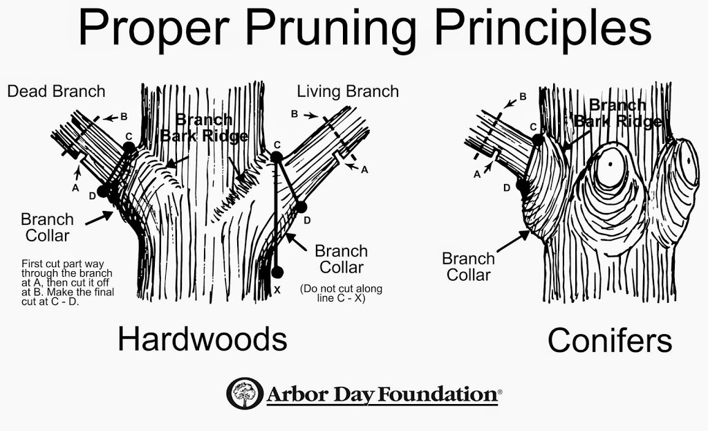 how to tree purning prune