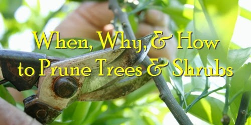 tree shrub care pruing