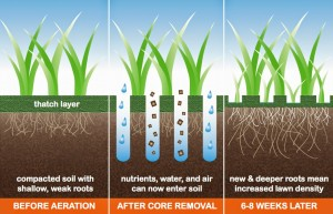 aeration-2Bfertilization