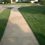 bluegrass lawn care mowing 4