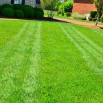 lawn-care-mowing 1