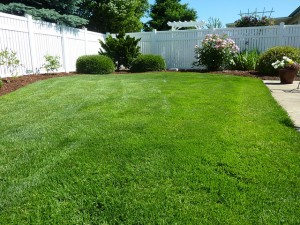 lawn-care-mowing 4