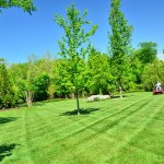 lawn-care-mowing2