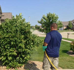 tree and shrub spraying in iowa