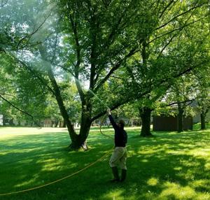 tree care company iowa