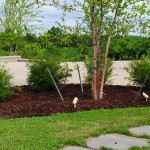 tree-shrub-care