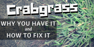 crabgrass cedar rapids lawn care