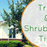 tree and shrub care cedar rapids