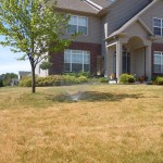 dormant lawn watering