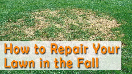 des moines fall lawn care