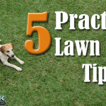 Top 5 Practical Lawn Care Tips for Urbandale Iowa