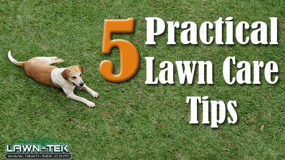 The Top 5 Practical Lawn Care Tips For Urbandale Ia