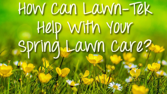 How Can Lawn-Tek Help With Your Spring Lawn Care