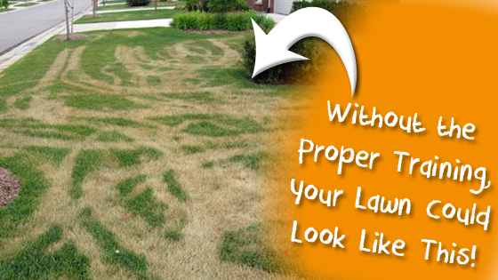 This is The Worst Thing A Lawn Care Company Could Do
