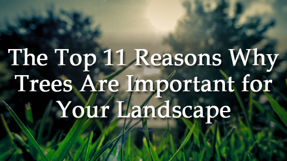 The Top 11 Reasons Why Trees Are Important for Your Landscape