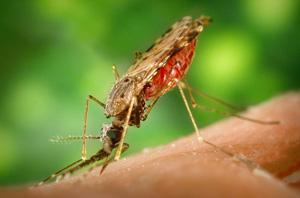 Iowa mosquito repellent yard spraying services cedar rapids iowa city des moines quad cities cedar falls waterloo