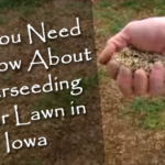 Everything You Need to Know About Seeding Your Iowa Lawn
